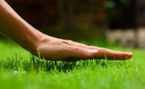 высота скоса газонной травы